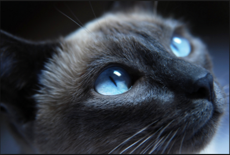 Así los ojos de un gato ven
