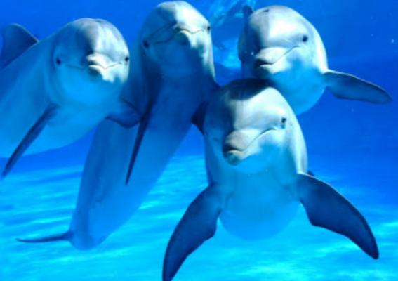 Los delfines tienen mejor memoria