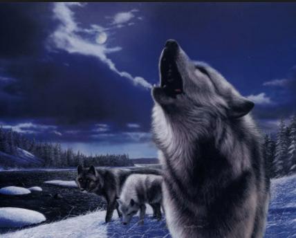 Los lobos aúllan