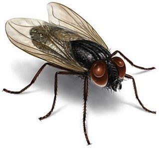 Todos los peligros que nos traen las moscas sin darnos cuenta