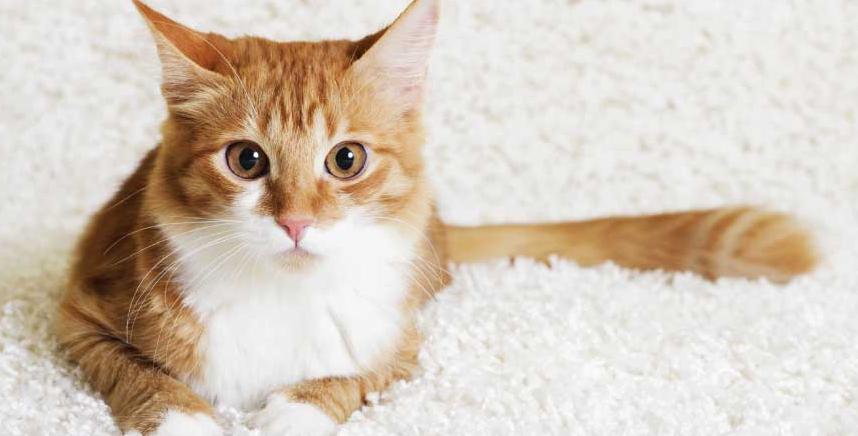 El lenguaje corporal de un gato