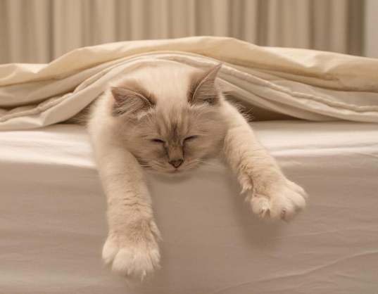 El animal que duerme más horas al día