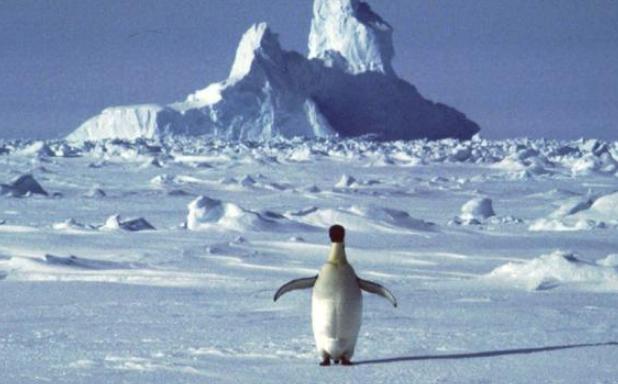 Curiosidades sobre Antártida que no sabías