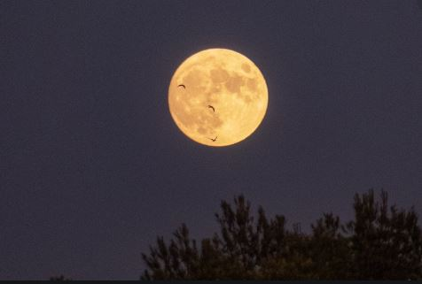 ¿Sabías que pasaría en la Tierra si desaparece la luna?